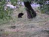外の子 果樹園の黒猫