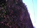 蔦の絡まる倉庫の壁