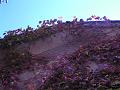 蔦の絡まる壁