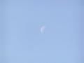 寒々とした月
