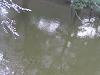 水の中も桜咲く