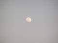 オレンジ色の月