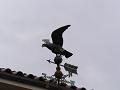 風見鳥(猛禽類)