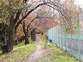 テニスコート裏 桜の道 秋