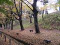 欅並木道 土手下のベンチ