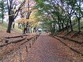 欅並木道 黄色と緑