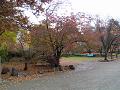 桜の葉は落ちて