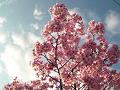 西日を浴びる彼岸桜