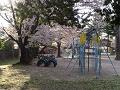 昇り棒、タイヤの馬跳び、桜の木