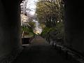 けやき並木遊歩道 夕暮れのトンネル