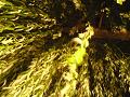 柳の下(夜)