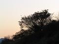 夕日の木影