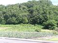 電車道の跡
