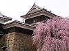 櫓門 しだれ桜八分咲き