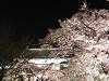 夜桜と櫓門