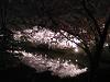 夜桜 お堀の中も満開