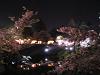 お堀端 夜桜見物の屋台
