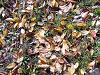 枯れ落ちた木の葉