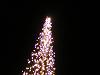 白い光のツリー