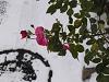 雪の道、冬の薔薇