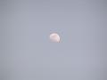 春の午後の月 月齢 9.5