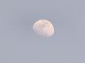 春の午後の月 月齢 9.5(改)
