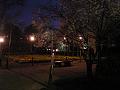 夜の花壇・ベンチ/梅の満開の下
