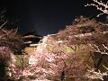 夜桜(二分咲き)越しに。