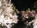 お堀に映る夜桜。