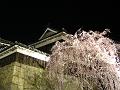 上田城北櫓と枝垂れ桜・夜。