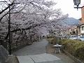 二の丸お堀端の桜並木