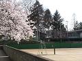 春のテニスコート