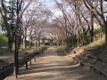 けやき並木遊歩道 春