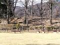 冬の終わり、春の初め、公園のベンチ