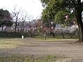 本丸跡広場、春の宴を待つ