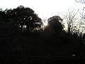 木々の間に日は沈む