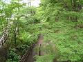 二の丸橋から見下ろすけやき並木遊歩道 夏