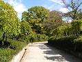 秋の日の枝垂れ桑の小道
