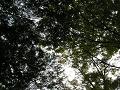 ケヤキの枝間、秋の陽光