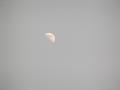 月齢 10
