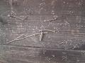 【ぶつぶつ注意】枯れた蔦の吸盤