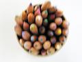 【ピンぼけ】鉛筆立ての中の色鉛筆を上から