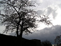 石垣の上の桜の影