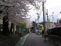 桜咲く通学路