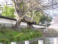上田藩主居館表御門 花筏の堀