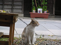 お野良の三毛猫