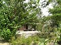 武家屋敷「旧樋口家住宅」/雑木林の中から縁側を見る。