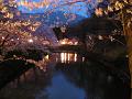 水面に映る夜桜