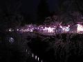 夜桜夜店1