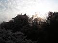 桜と上田城(逆光)春の午後